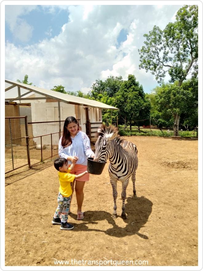 INTERACTIVE zebra