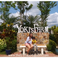 Yoki's Farm - What you need to know and why you should pay a visit