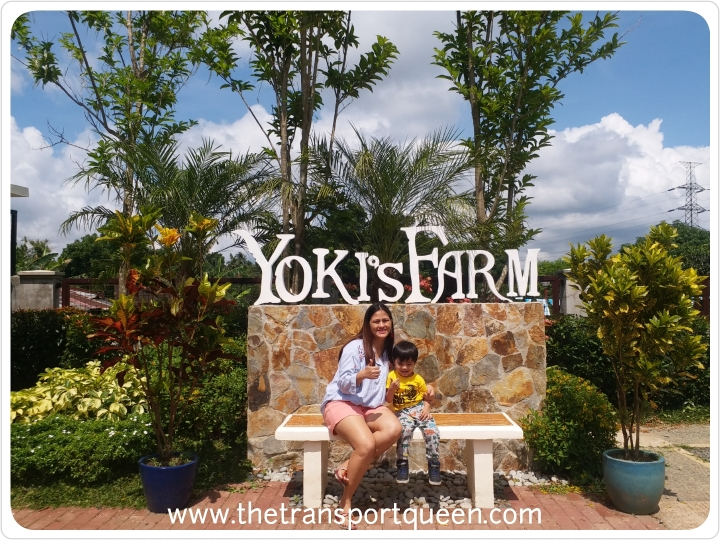 Yoki's Farm – What you need to know and why you should pay a visit